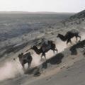 Crossing Sahara