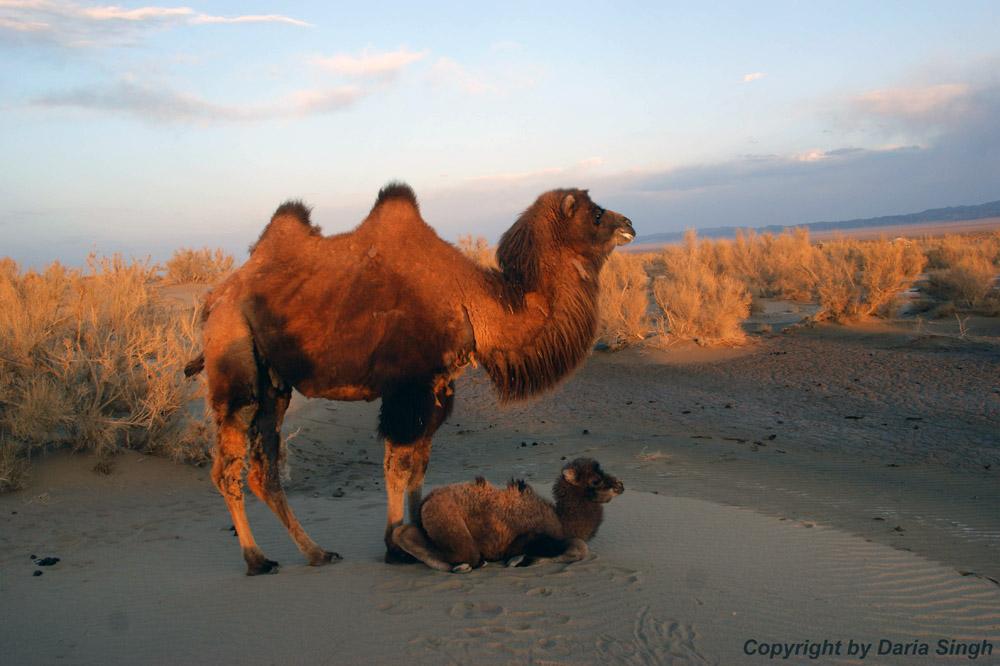 Breeding programme - Copyright by Daria Singh