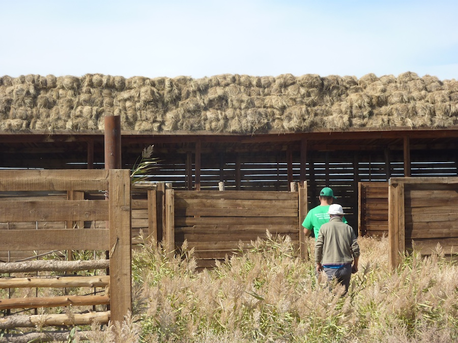 Winter hay at the Wild Camel Breeding Centre at Zakhyn Us
