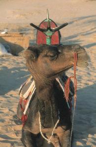 5 - Trans-Saharan Trek