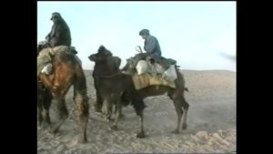 Camels Run Away