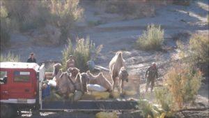Wild Camel Release