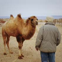Wild Camel Protection Foundation - Mongolia