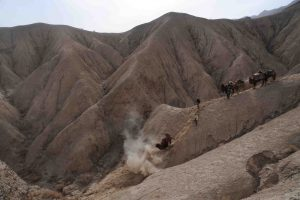 2011 Expedition. Bactrian camel falls but is unhurt, Desert of Lop, China